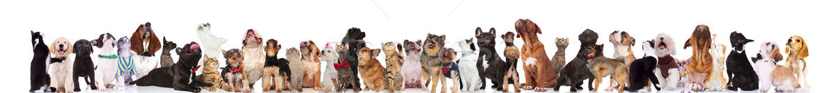 team of many curious cats and dogs looking up Stock photo © feedough