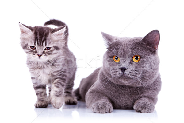 adorable cats Stock photo © feedough