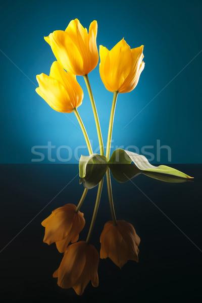 most beautiful yellow tulips Stock photo © feedough