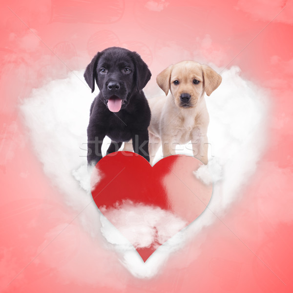 labrador retriever puppies standing on a heart shaped cloud Stock photo © feedough