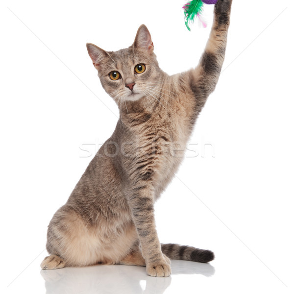 adorable cat playing with toy with its paw Stock photo © feedough