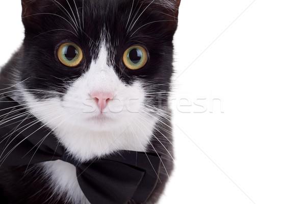Stok fotoğraf: Siyah · beyaz · kedi · resim · sevimli