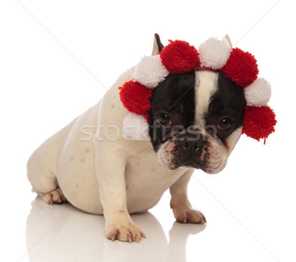 sad bulldog wearing a headband looks at camera Stock photo © feedough