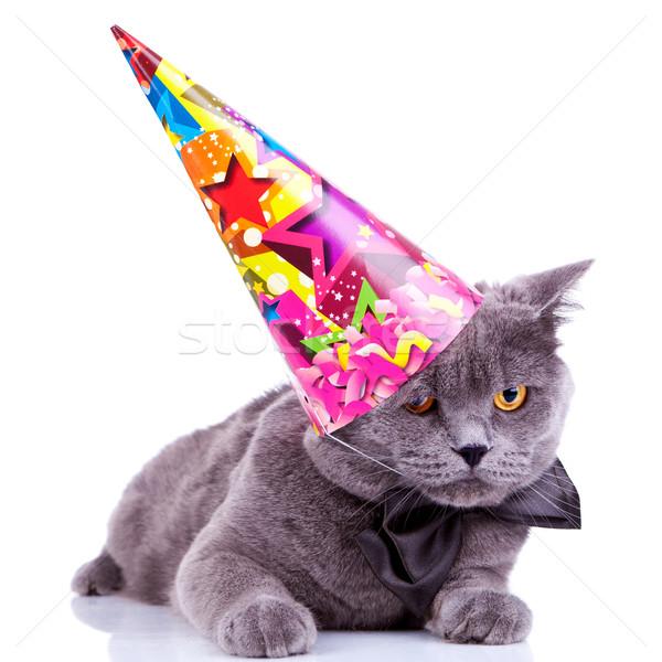 Foto stock: Grande · inglês · festa · gato · seis