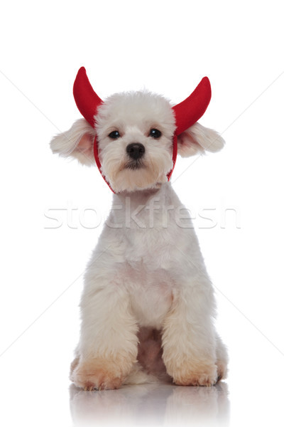 Adorable assis blanche diable paire Photo stock © feedough