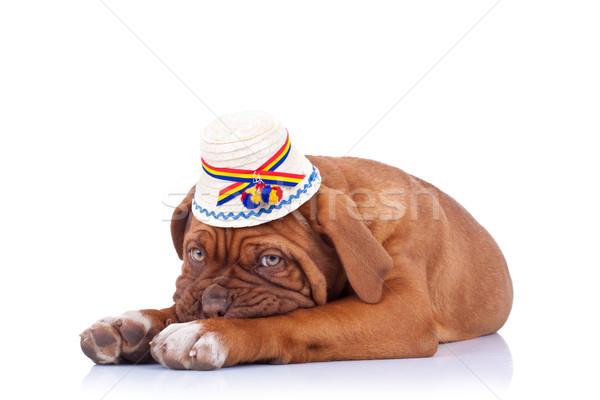 печально французский дог традиционный Hat Сток-фото © feedough