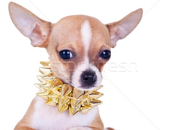 Kép kutyakölyök arany kutya fém punk Stock fotó © feedough