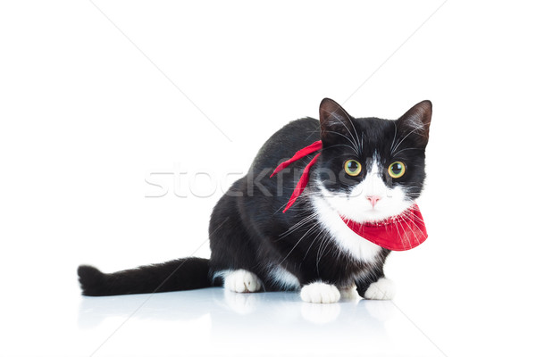 Blanc noir chat rouge écharpe Photo stock © feedough