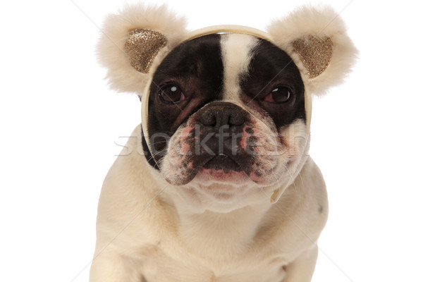 close up of cute puppy with fluffy ear headband Stock photo © feedough