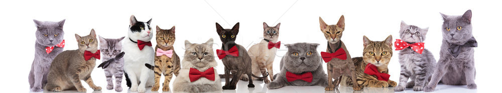 large team of elegant cats wearing red bowties Stock photo © feedough