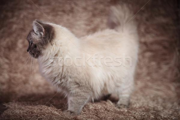 Vista lateral hermosa gato peludo pie fondo Foto stock © feedough