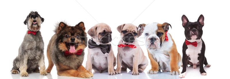 Grande gruppo sei elegante cani bianco rosso Foto d'archivio © feedough
