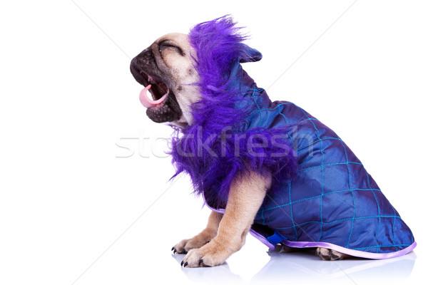 Stok fotoğraf: Yan · çığlık · atan · köpek · yavrusu · köpek · yandan · görünüş · küçük