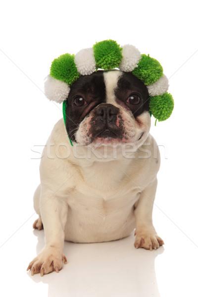 sitting french bulldog wearing green and white headband Stock photo © feedough