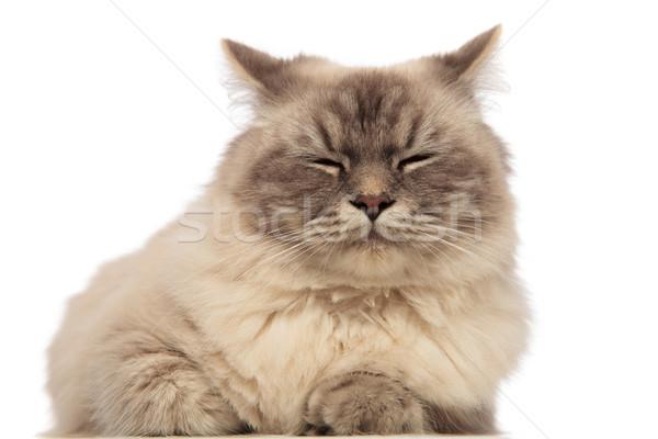 Cute grigio cat dormire bianco Foto d'archivio © feedough