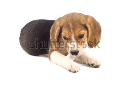 Kutyakölyök rág szőr labda imádnivaló fiatal Stock fotó © feedough