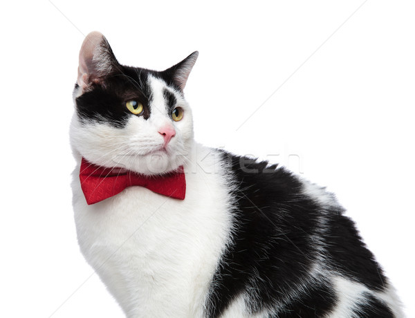 close up of a classy cat looking to the side Stock photo © feedough