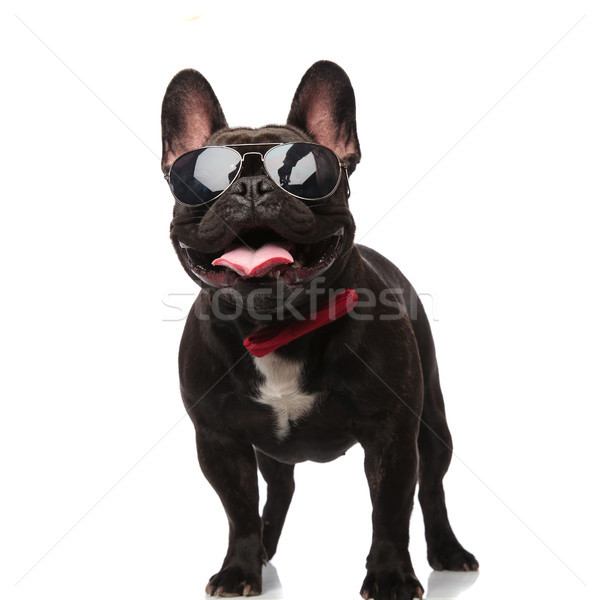 cool french bulldog with sunglasses and bowtie looks up Stock photo © feedough