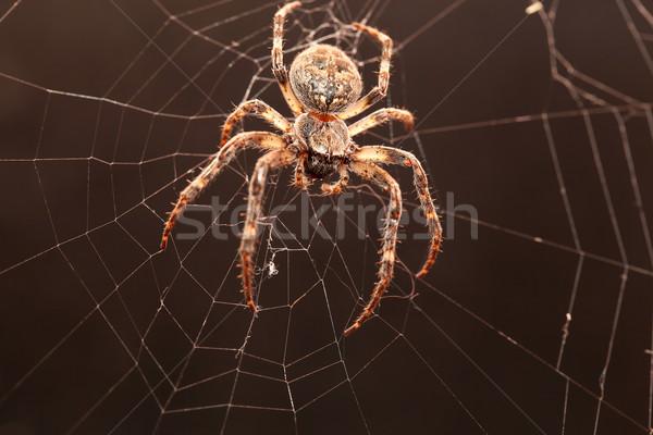Kereszt pók net sötétség háló fekete Stock fotó © feedough