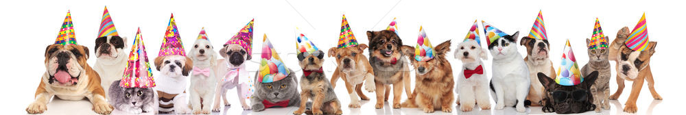 large team of cats and dogs ready for birthday party Stock photo © feedough