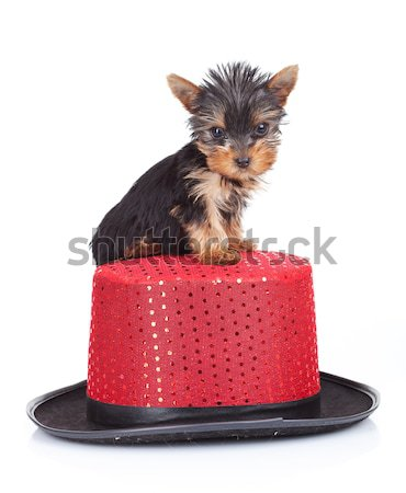 toy puppy standing near a big present Stock photo © feedough