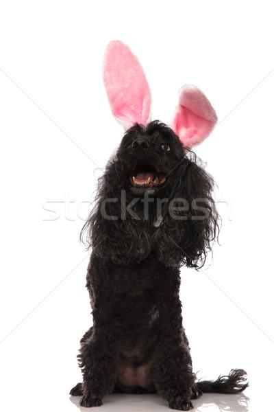 Mutlu kaniş easter bunny kulaklar Stok fotoğraf © feedough