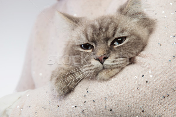 adorable cat resting in the arms of a person Stock photo © feedough