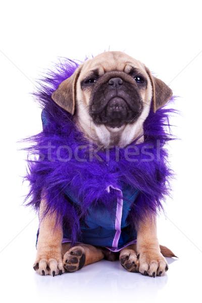 Stockfoto: Puppy · hond · witte · souteneur · naar · weinig