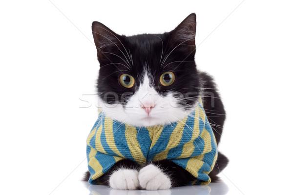 Stok fotoğraf: Siyah · beyaz · kedi · elbise · resim · sevimli