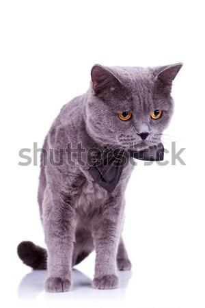 ストックフォト: 好奇心の強い · ビッグ · 英語 · 猫 · 見える