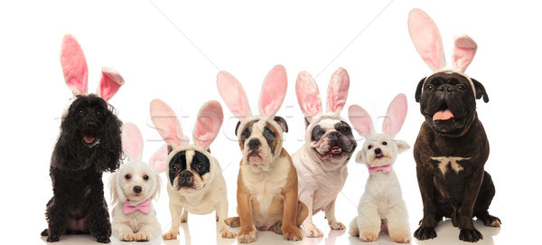 group of cute dogs wearing easter bunny ears  Stock photo © feedough