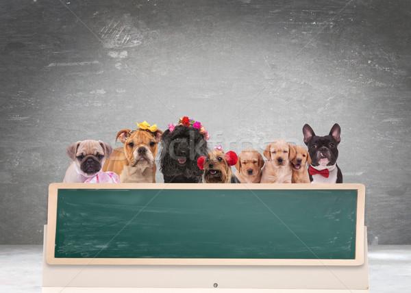 équipe cute chiens derrière grand tableau noir Photo stock © feedough