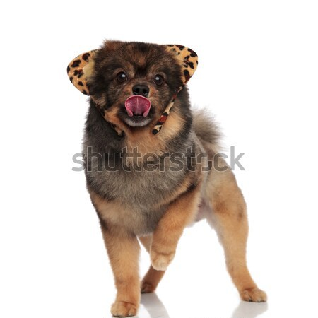 cute pom with leaopard ears headband stands and pants Stock photo © feedough
