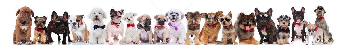 Stock fotó: Nagyobb · csoport · úriember · kutyák · különböző · visel · áll