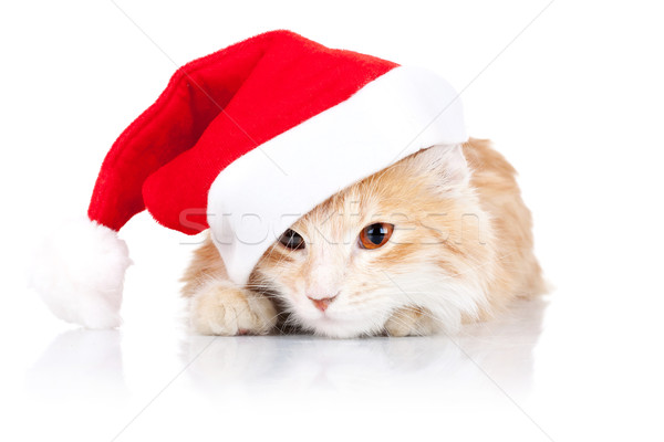 Stock photo: cute cat wearing a santa hat