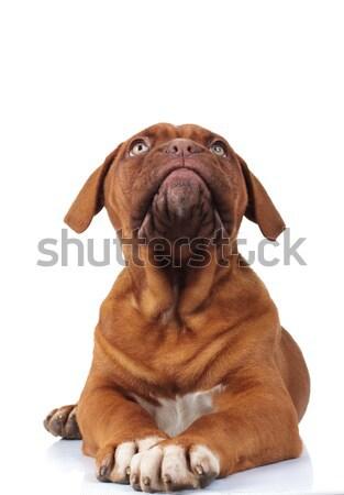 Singolare piccolo cucciolo cane Foto d'archivio © feedough