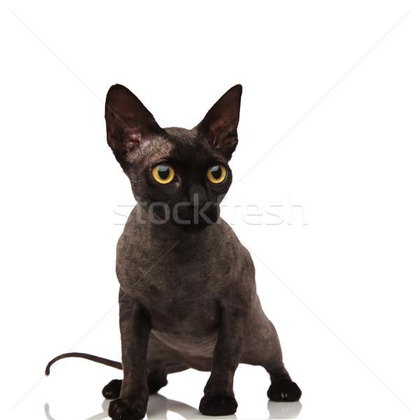 Сток-фото: любопытный · мало · серый · кошки · сторона