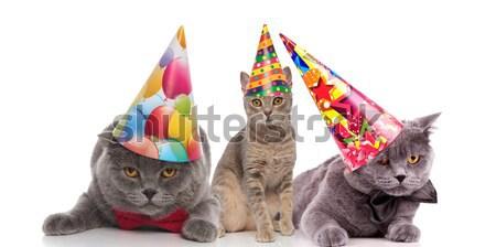 Imádnivaló születésnap szürke macska színes sapka Stock fotó © feedough
