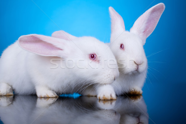 white little bunnies Stock photo © feedough