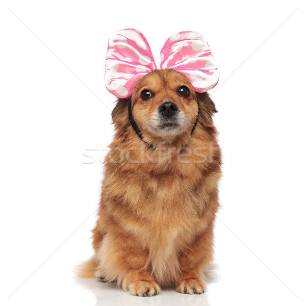 surprised brown dog with pink bow headband looks to side Stock photo © feedough