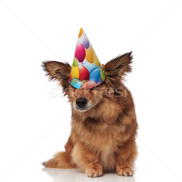 смешные собака рождения Hat глазах коричневый Сток-фото © feedough
