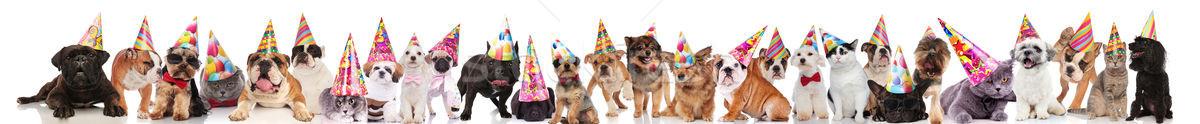 Gelukkig huisdieren kleurrijk verjaardag Stockfoto © feedough