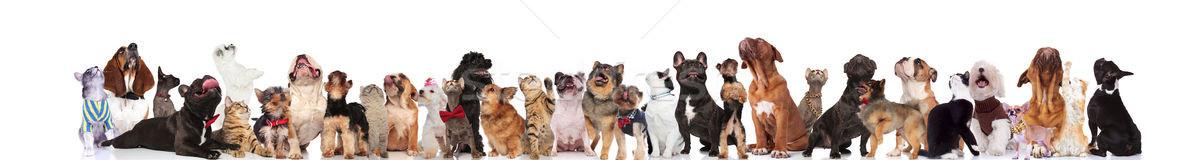 çok güzel Evcil elbise aramak grup Stok fotoğraf © feedough