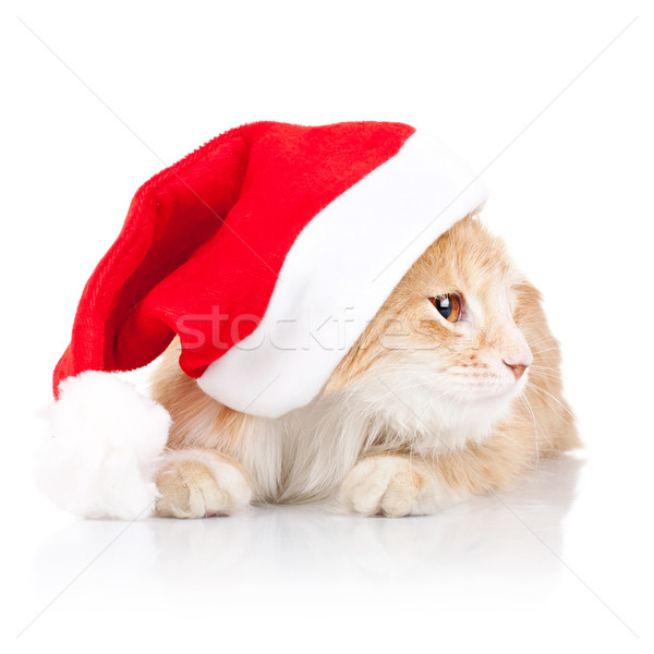 cat wearing a santa hat and looking to a side Stock photo © feedough