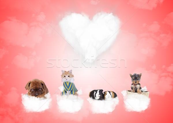группа милые животные любви облака Сток-фото © feedough