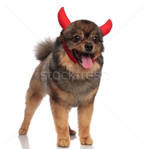 Stock fotó: Aranyos · ördög · áll · néz · oldal · fehér
