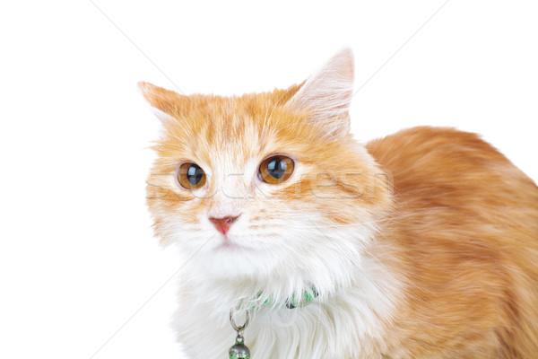 head of an orange cat Stock photo © feedough