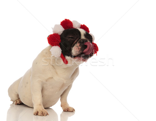 puppy wearing headband licks his nose and looks to side Stock photo © feedough
