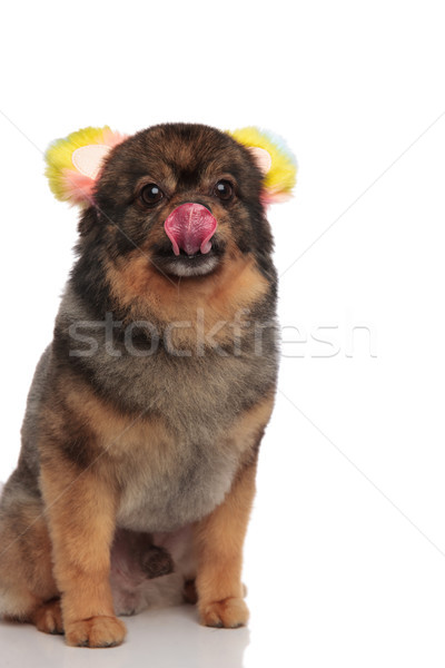 Bonitinho faminto orelhas nariz colorido sessão Foto stock © feedough