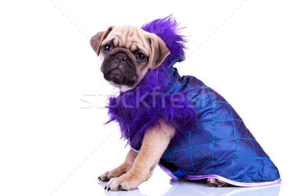 Stok fotoğraf: Yandan · görünüş · köpek · yavrusu · köpek · komik · küçük · oturma
